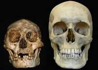 Schedels van Homo floresiensis en Homo Sapiens