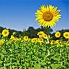 Sunshine en zonneschijn