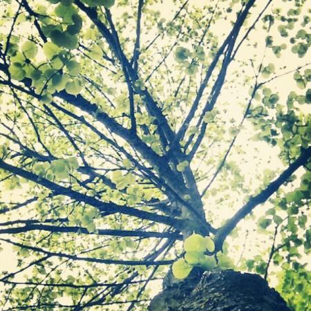De boom in