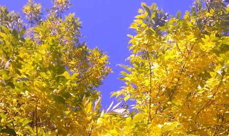 Mooie herfstkleuren in het stadspark van Antwerpen