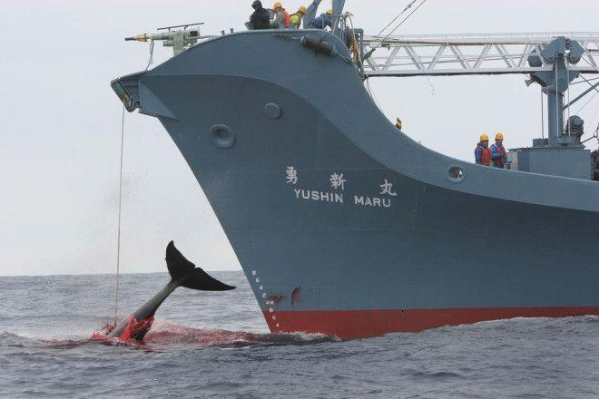 Japanse walvisjacht
