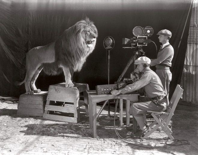 Opname van de MGM leeuwenbrul