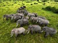 Olifanten kuddedieren
