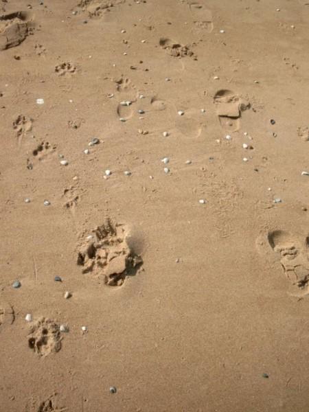 Schelpen in het zand