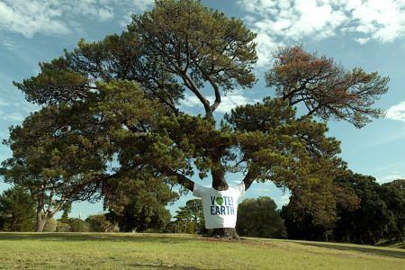 Tree wearing t-shirt